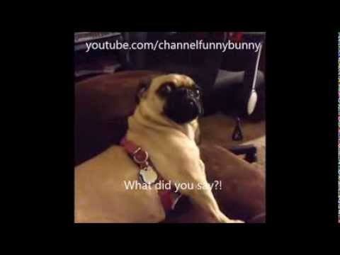 Best of Dog Vines