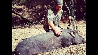Pork Interrupted - NorCal Archery Blacktail Hunt Turned Wild Pig Hunt