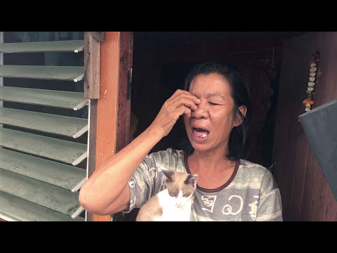MGTOW Get Married to Make Women Happy! Don't be Selfish. Help Injured Cat in Thailand