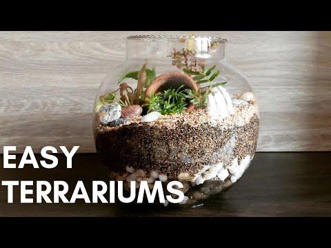 How to make a Terrarium easily