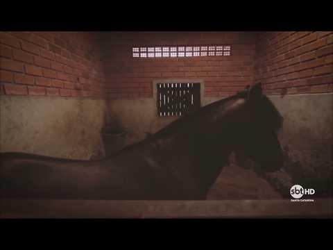 SBT SC estreia Passion | Cavalo Crioulo