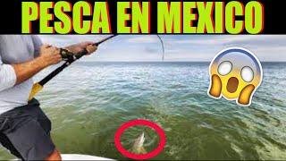 Increíble pesca salvaje en el golfo de México  . pescando)