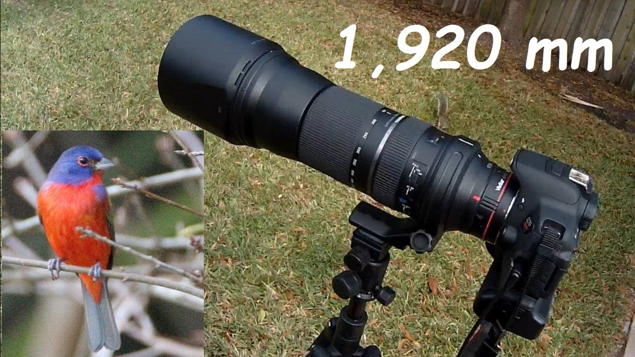 Test Of Tamron 150 600 Mm Zoom Lens With Vivitar 2x Teleconverter Sp 600mm F 5 63 Di Vc Usd G2 For Canon Ef 1920mm