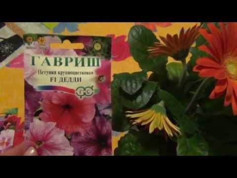 Посадка семян петуньи и примулы  Покупка Герберы Весеннее настроение