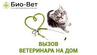 Вызов ветеринара на дом. Ветеринарная клиника Био-Вет.(Подробнее на сайте: http://www.bio-vet.ru/vyzov-veterinara-na-dom Наш форум http://www.bio-vet.ru/forum-1 Официальная группа в контакте https://vk..., 2017-01-24T07:22:16.000Z)