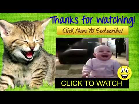 Cats And Dogs Scared Of Farts