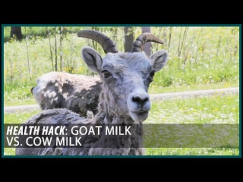 goat-milk-vs.-cow-milk:-health-hacks--thomas-delauer