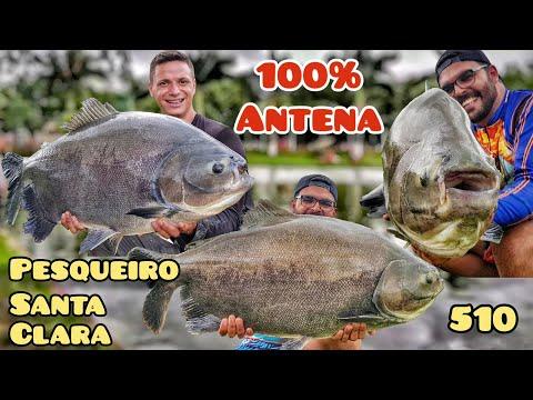 Santa Clara - Pescaria 100% na anteninha - Fishingtur na TV 510