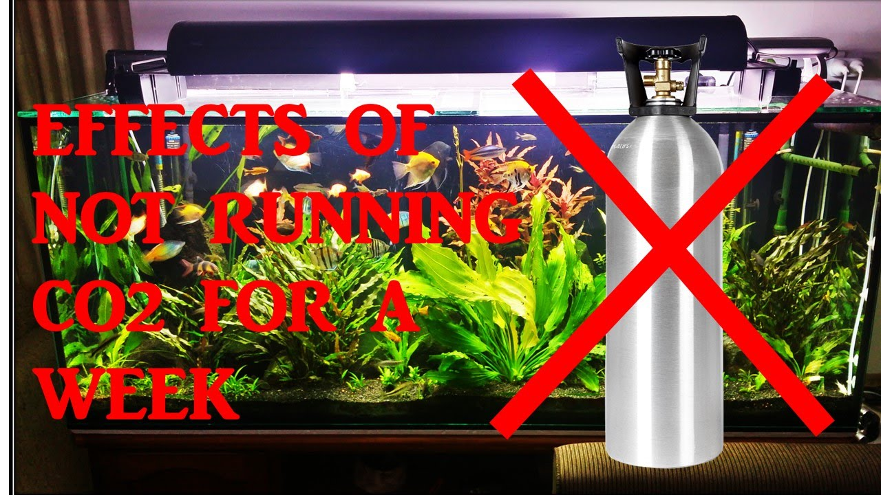Effects of not running co2 for 1 week in my planted for Co2 fish tank