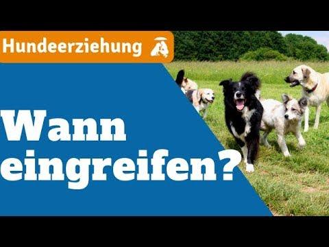 Hundeerziehung: Hunde im Freigang - Wann Eingreifen?