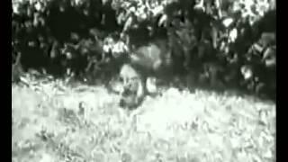 Питон против тигра(Python vs. Tiger., 2012-12-10T17:27:37.000Z)