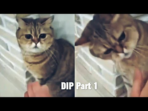 New Funny videos 2020 | Cat Doing Karate