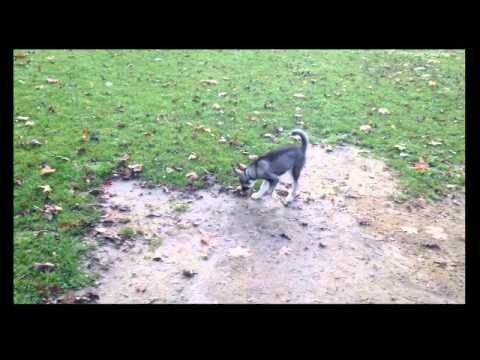 Hund Komm Rückruf beibringen