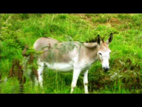 Trip to Mukuvisi Woodlands - Zimbabwe.wmv