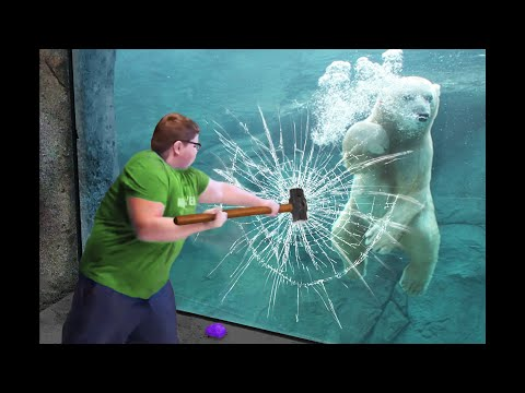 he broke the polar bear's glass...