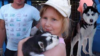 VLOG Настя и Саша питомник Эльбрус хаски самоеды лайки щенки катаемся играем