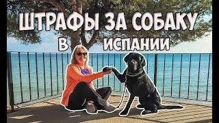 Штрафы в Испании | Правила выгула собак | Законы о собаках