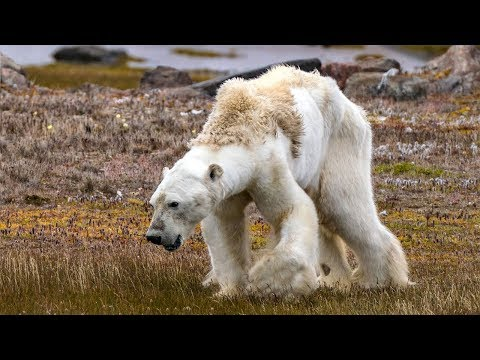 Polar Bears and the Science of Climate Change with Kieran Mulvaney