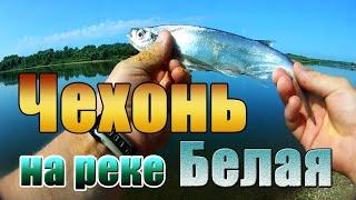 Чехонь лещ плотва Рыбалка на реке Белая