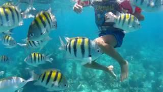 Cuba Trinidad Barriera corallina