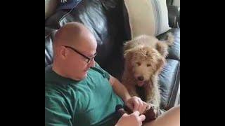 man-sews-dog-s-favorite-toy-back-together-viralhog