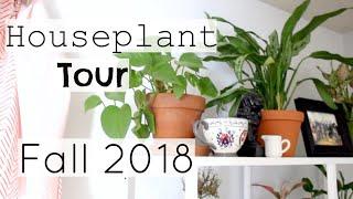 Houseplant Tour | Fall 2018 Houseplants