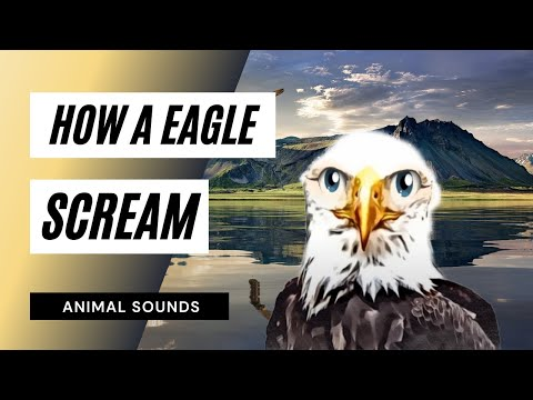 how a eagle scream sound effect animation youtube. Black Bedroom Furniture Sets. Home Design Ideas