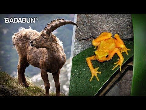 9 Increíbles Animales Que El Hombre Extinguió