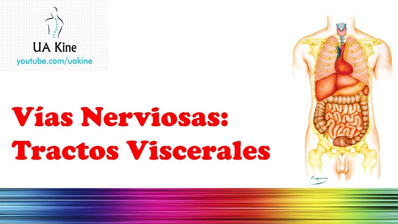 Vias Nerviosas Viscerales - YouTube