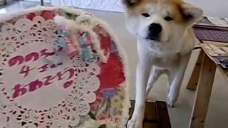 2018年1月10日、 大館ゼロダテアートセンターの あいにいける秋田犬のの...
