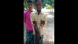 Gangetic Dolphin Tortured in Kolkata  | কলকাতা 2020