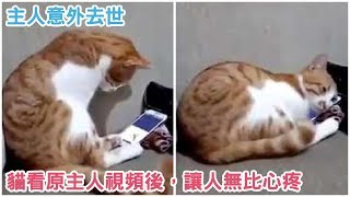 主人因意外去世,有一天貓看了原主人視頻後的反應,讓人無比心疼