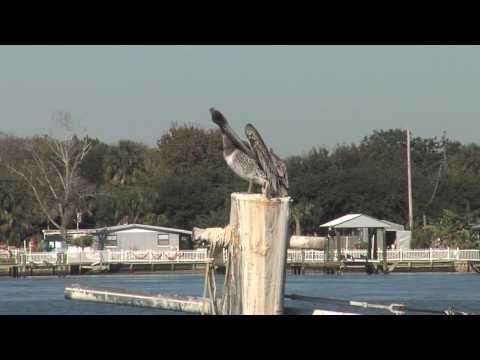 HD TRAVEL, St John's Ferry, Mayport, FL