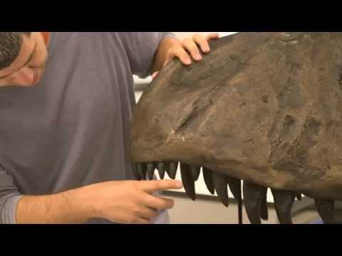 Where did the Triceratops get its frill?  - Dr David Hone