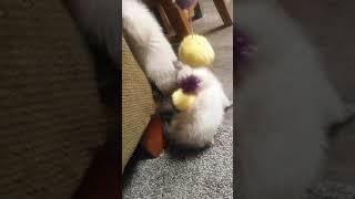 World's cutest kitty part 3