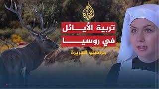 مراسلو الجزيرة-الأيائل بروسيا ومصارعة الثيران بإسبانيا