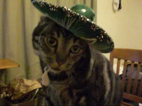 Mexican Cat Dance [Starring Pork Chop]