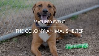 Local Love: The Colony Animal Shelter