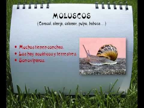 LOS ANIMALES INVERTEBRADOS.MPG