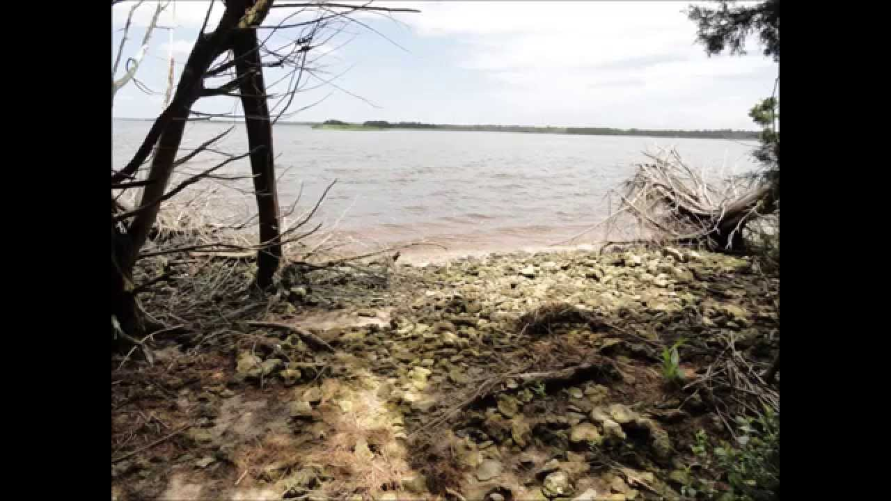 Shark Tooth Island Cape Fear River Wilmington NC   YouTube