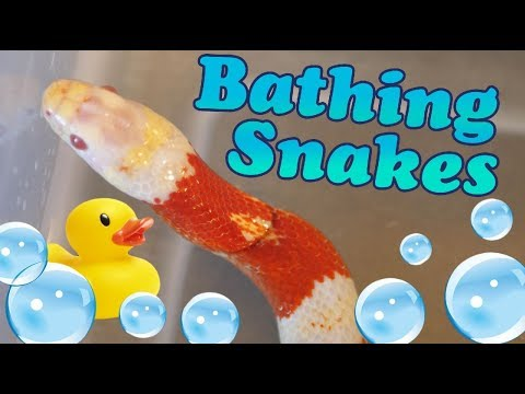 How to Give Snakes a Bath!