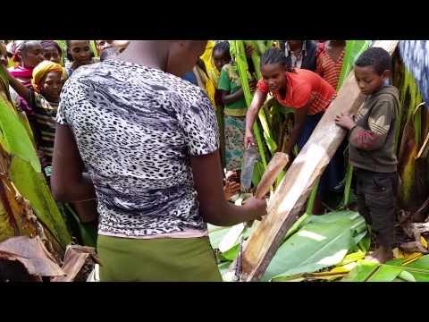 Ethiopia, Day03, preparing false banana