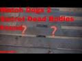 Watch Dogs 2 Secret Dead Bodies Found