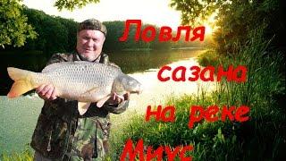 Ловля сазана на реке Миус