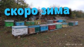 Пчелы собрались в клуб 22.10.2019