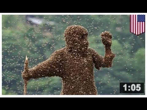 les abeilles pas les oiseaux un homme se fait tuer par plusieurs centaines de milliers d. Black Bedroom Furniture Sets. Home Design Ideas
