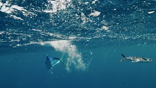 Flying fish hunt - The Hunt BBC One