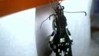 自製影片請多多包含怕蟲者勿入.
