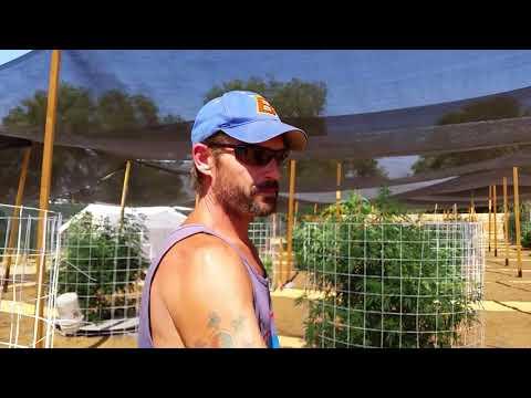 Outdoor hydroponics Marijuana grow #9