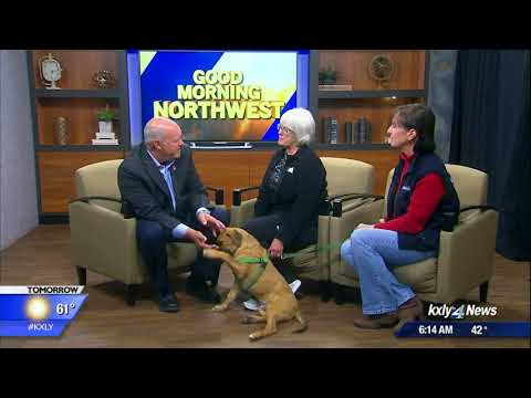 Pet of the Week: Kelton